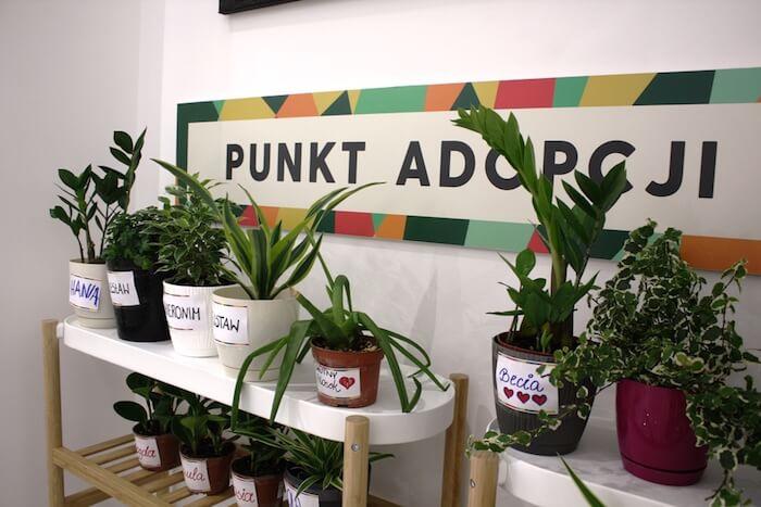 zielone rośliny w doniczkach
