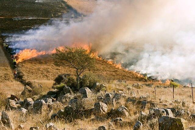 Zdjęcie z wypalania traw