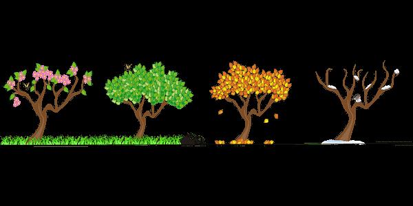 drzewa w czterech porach roku