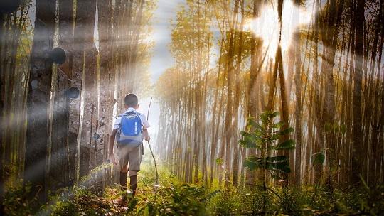 Dziecko na wycieczce w lesie