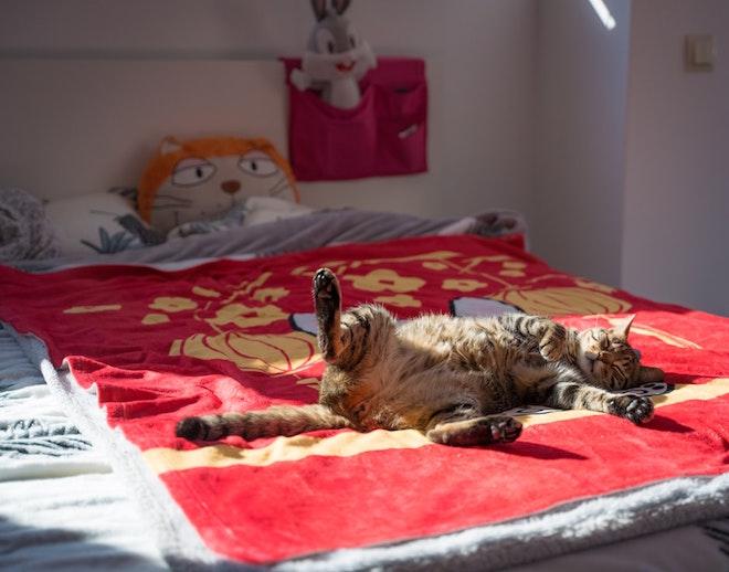 Kot śpiący na dziecięcym łóżku