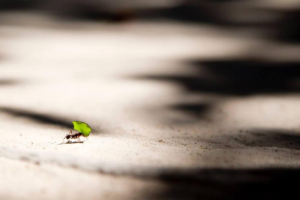 mrówka Zaniedbajka w lesie