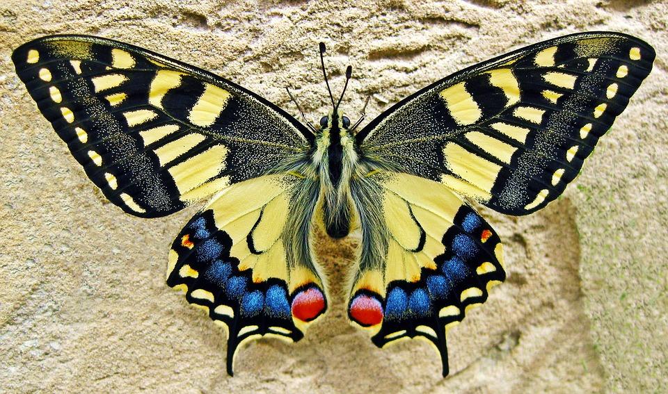 Ekspozycje motyli