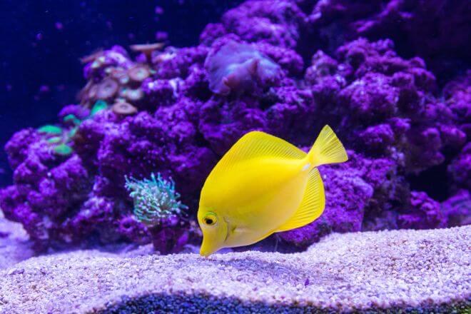 Ryba w gdyńskim akwarium