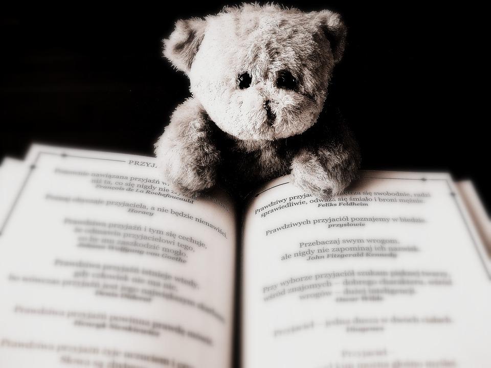 Miś siedzący nad książką