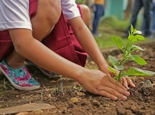 Jak kształtować proekologiczne postawy u dziecka?